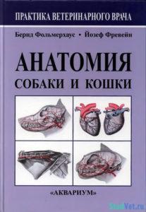Анатомия собаки и кошки - Бернд Фольмерхаус, Йозеф Фревейн