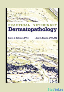 Practical Veterinary Dermatopathology for the Small Animal Clinician