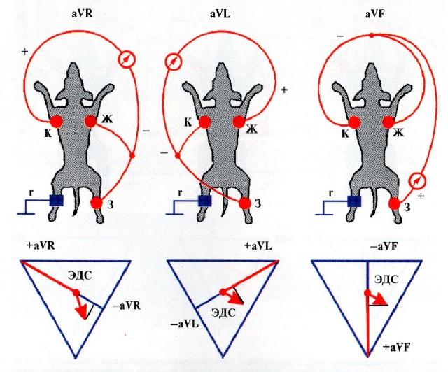 Формирование трех усиленных отведений от конечностей