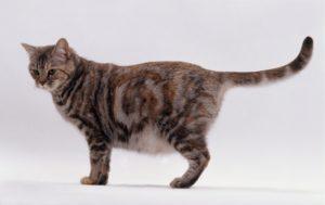 аборт кошек