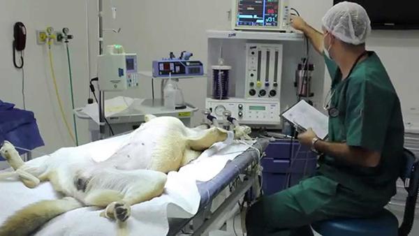 анестезия собака