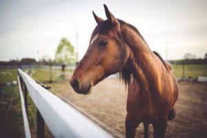 Кормление рабочих лошадей