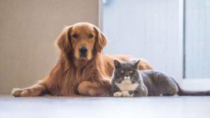 Особенности кормления собак и кошек