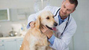 Общие методы клинического исследования животных