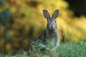 Корма, рационы, техника кормления кроликов