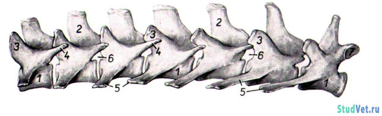 Болит шейная мышца с левой стороны
