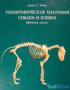 Топографическая анатомия собак и кошек - Бойд Джек С.